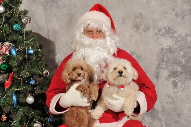 Mattie, Toto, Santa